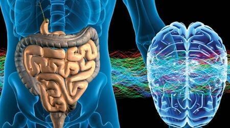 Det enteriska nervsystemet: den andra hjärnan