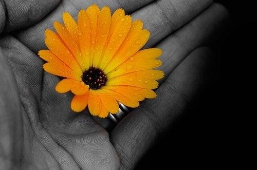 Gul blomma i en öppen hand