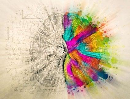 Hjärnans två olika halvor.
