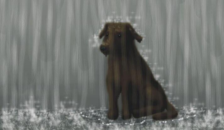 Hund i regnet.