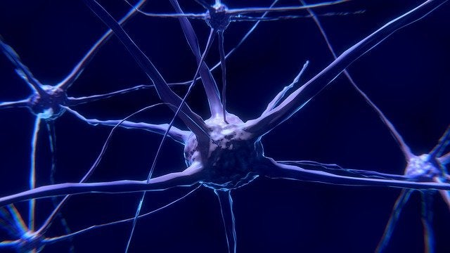 Neuroner i hjärnan: Vad är de och hur fungerar de?