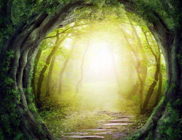 ljustunnel i skogen