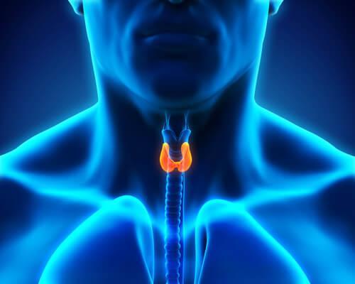 skäldkörteln - om hormoner