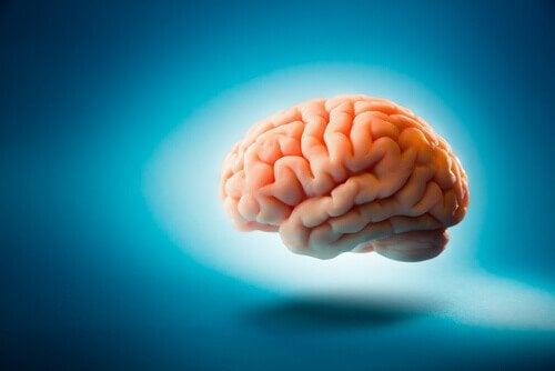 svävande hjärna