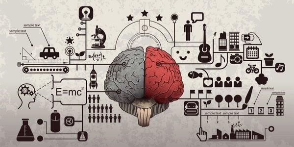 Olika delar av hjärnan.