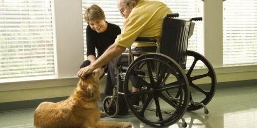 Rullstolsbunden som klappar terapihund