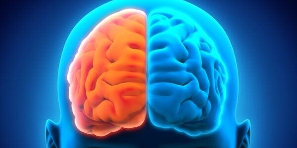 om neurologiska störningar