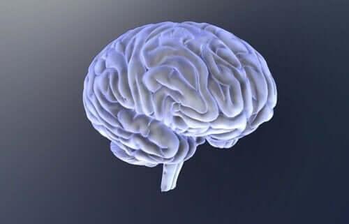 Bild på hjärnan.