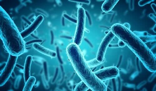 Blå bakterier.