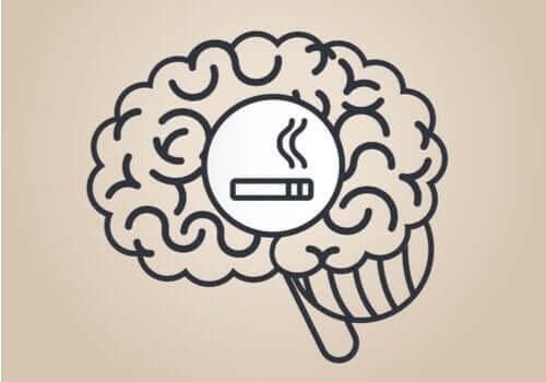 Fakta om hur nikotin påverkar hjärnan