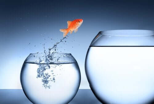 Fisk som hoppar till en ny skål.