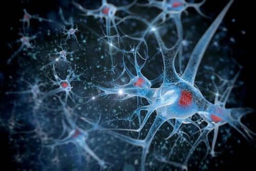 Undersökning av neuroner med forskningsmetoder inom biopsykologi