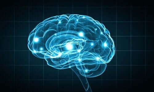 Forskningsmetoder inom biopsykologi