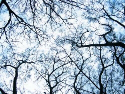 Dendriter: Början på en neurovetenskaplig revolution