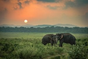 De ledsna elefanterna: en sann berättelse