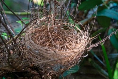 Fågelbo utan ägg.