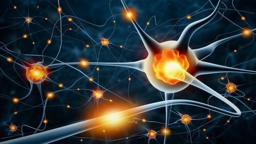 Neuroner i hjärnan.