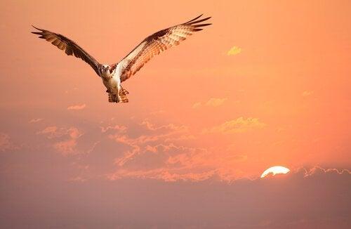 En saga om identitet: fågeln som inte kände till sin egen
