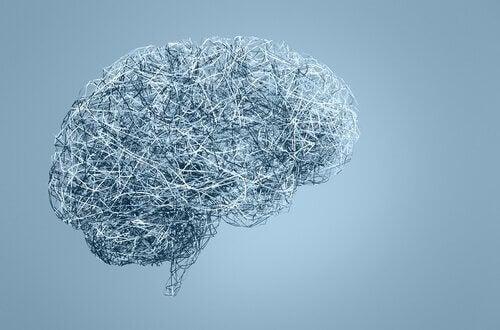 Struktur av hjärnan.