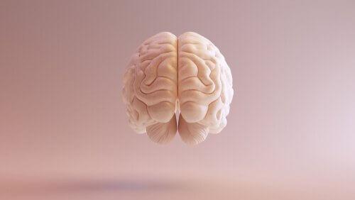 Flytande hjärna