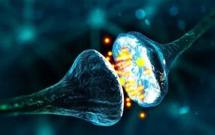 Synapser i hjärnan