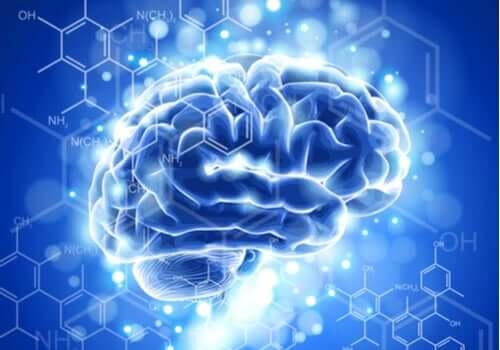 Kännetecknen och utvecklingen av neuroetik