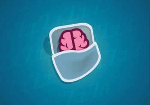 Vad som händer med våra neuroner då vi sover