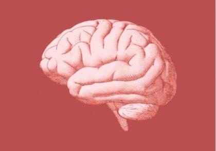 Röd bild av hjärnan.