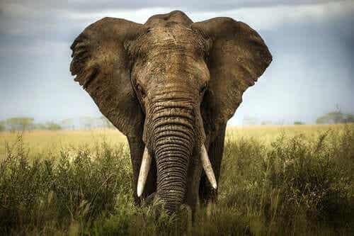 De blinda männen & elefanten: värdera andras åsikter