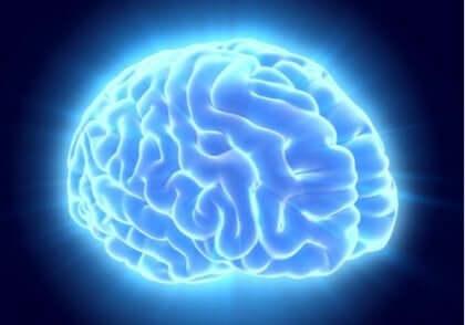 Blå upplyst hjärna.
