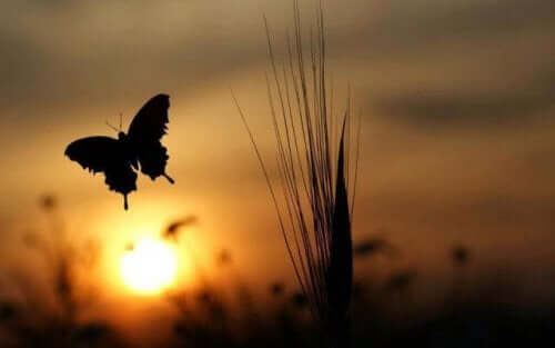 Fjäril i skymningen.