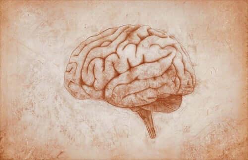 Ritning av hjärnan.