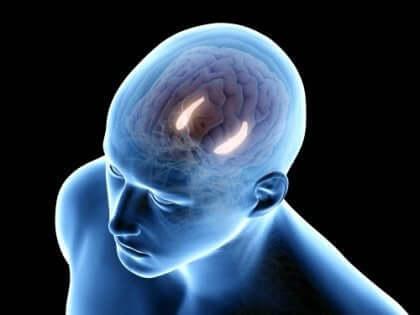 Schematisk bild av hjärnan.