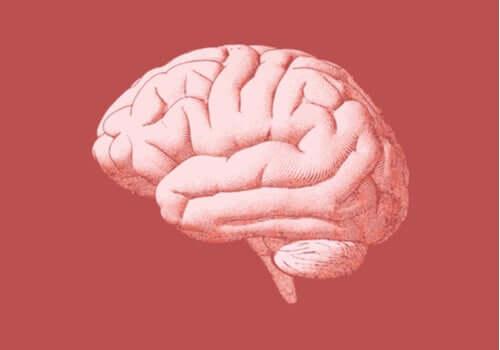 Strukturen och funktionerna hos bakhjärnan