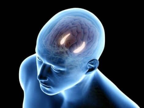 Hippocampus i hjärnan