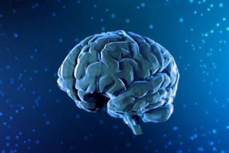 Illustration av hjärnan