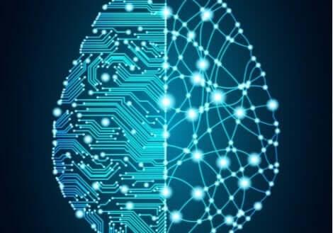 Kopplingarna i hjärnan