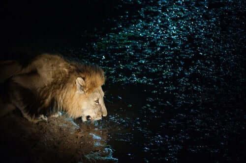 fantastiska korta historier: sagan om lejonet