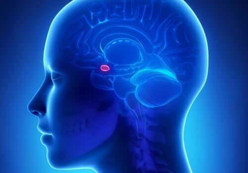 Område i hjärnan.
