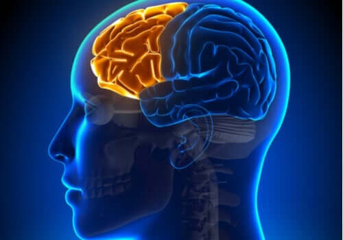 Dysexekutivt syndrom: då frontalloben fallerar