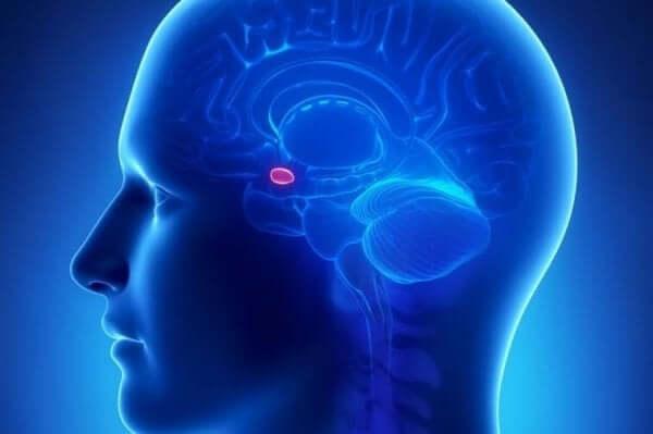 """""""Enligt Arzy-experimentet spelar amygdala en roll i att vår känsla av att någon annans närvaro när de inte är där."""