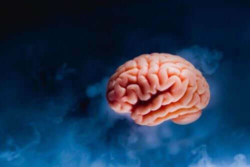 Hjärna mot blå bakgrund.