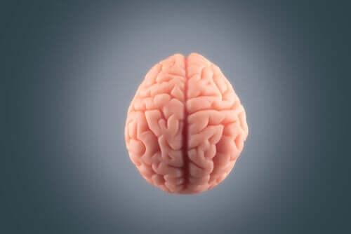 Hjärna mot grå bakgrund.