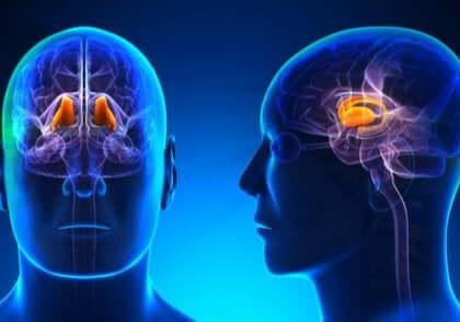 Thalamus är viktig för att vi ska uppfatta smärta