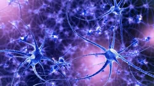 Hjärnplasticitet: egenskaper och typer