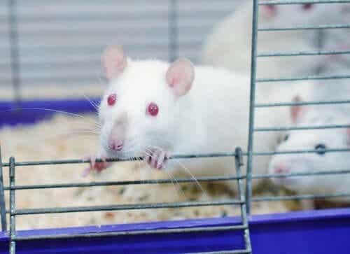 Vad vi lärde oss av råttparksexperimentet