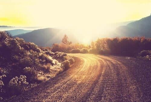 Solljus på vägen.