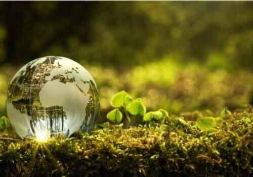 Hur kan man bidra till att förbättra miljön?