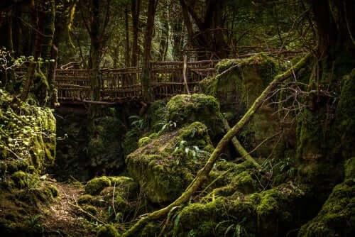 Brygga i skogen.