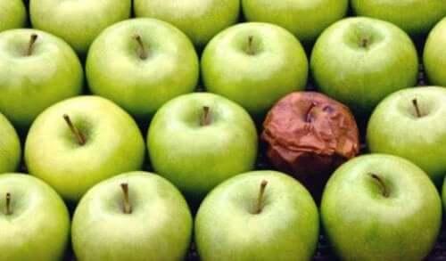 Teorin om det ruttna äpplet på arbetsplatsen